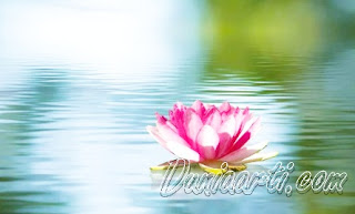 Arti Mimpi Mencium Bunga Menurut Islam