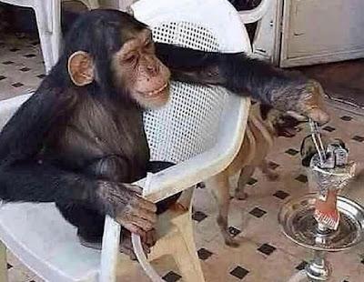 monkey hookah