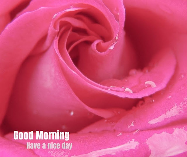 flowers pics for good morning