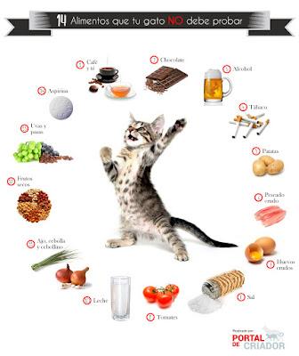 alimentación-prohibida-gatos