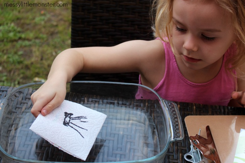 magic paper towel science activity