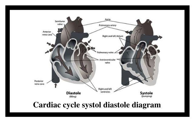 Cardiac cycle systol diastole diagram
