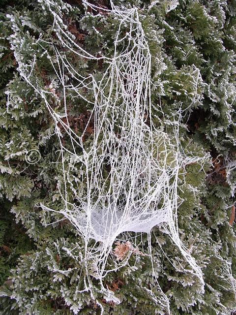 Winter Impressions #9