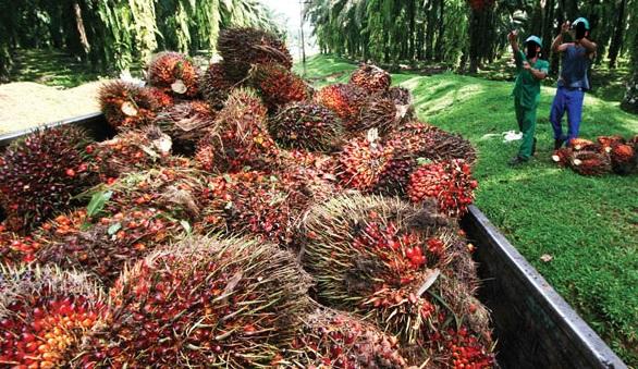 Implementasi B30, Pemerintah Harus Siapkan Insentif Untuk Produsen Sawit