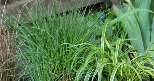 Ornamental Grasses Upstate Ny : Cozy little house try a container of ornamental grasses