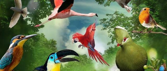 بحث  حول الطيور
