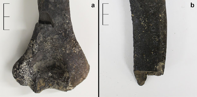 Evidence of Iron Age massacre found in Spain