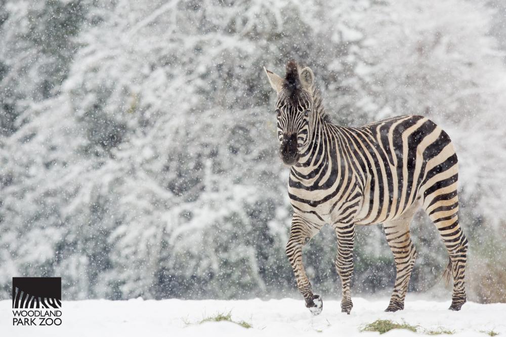 animals made of snow - photo #13