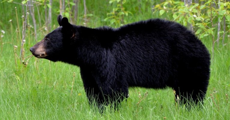 Three-Year-Old Missing For Days In The Freezing Cold Reported That A Bear Kept Him Safe