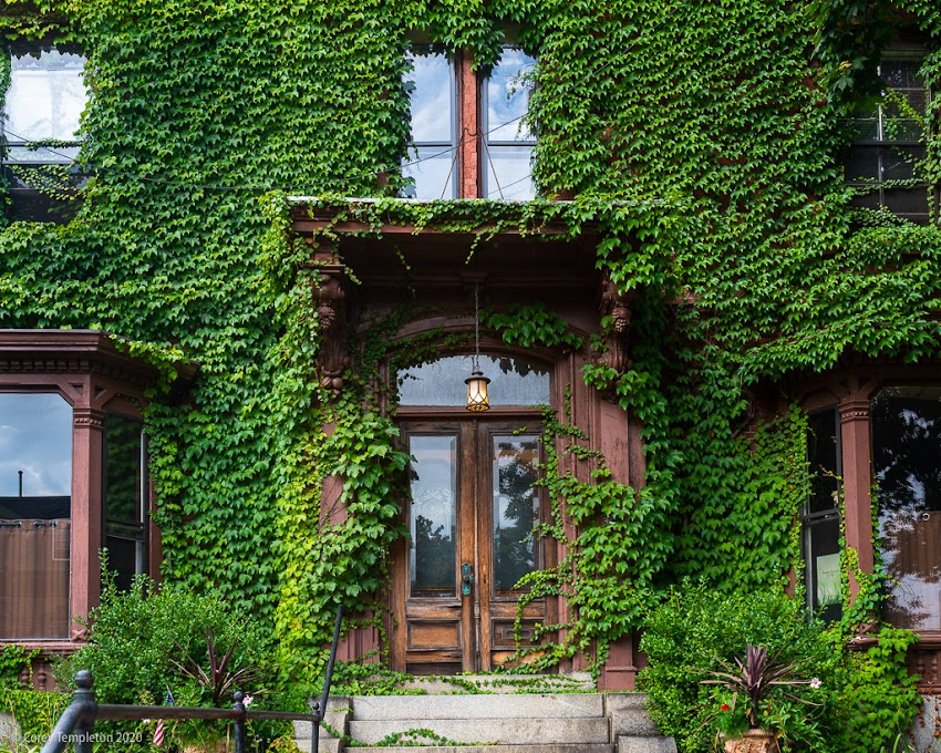 Portland, Maine USA September 2016 photo by Corey Templeton. An impressive ivy display at 9 Deering Street. A throwback to September 2016..
