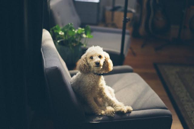 living room fellowship