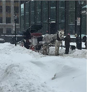 carruagem de dois lugares e um cavalo branco