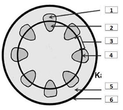 Soal Pembahasan Struktur Dan Fungsi Jaringan Tumbuhan Essay Muttaqin Id