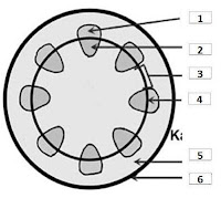 Soal & Pembahasan Struktur dan Fungsi Jaringan Tumbuhan (Essay)