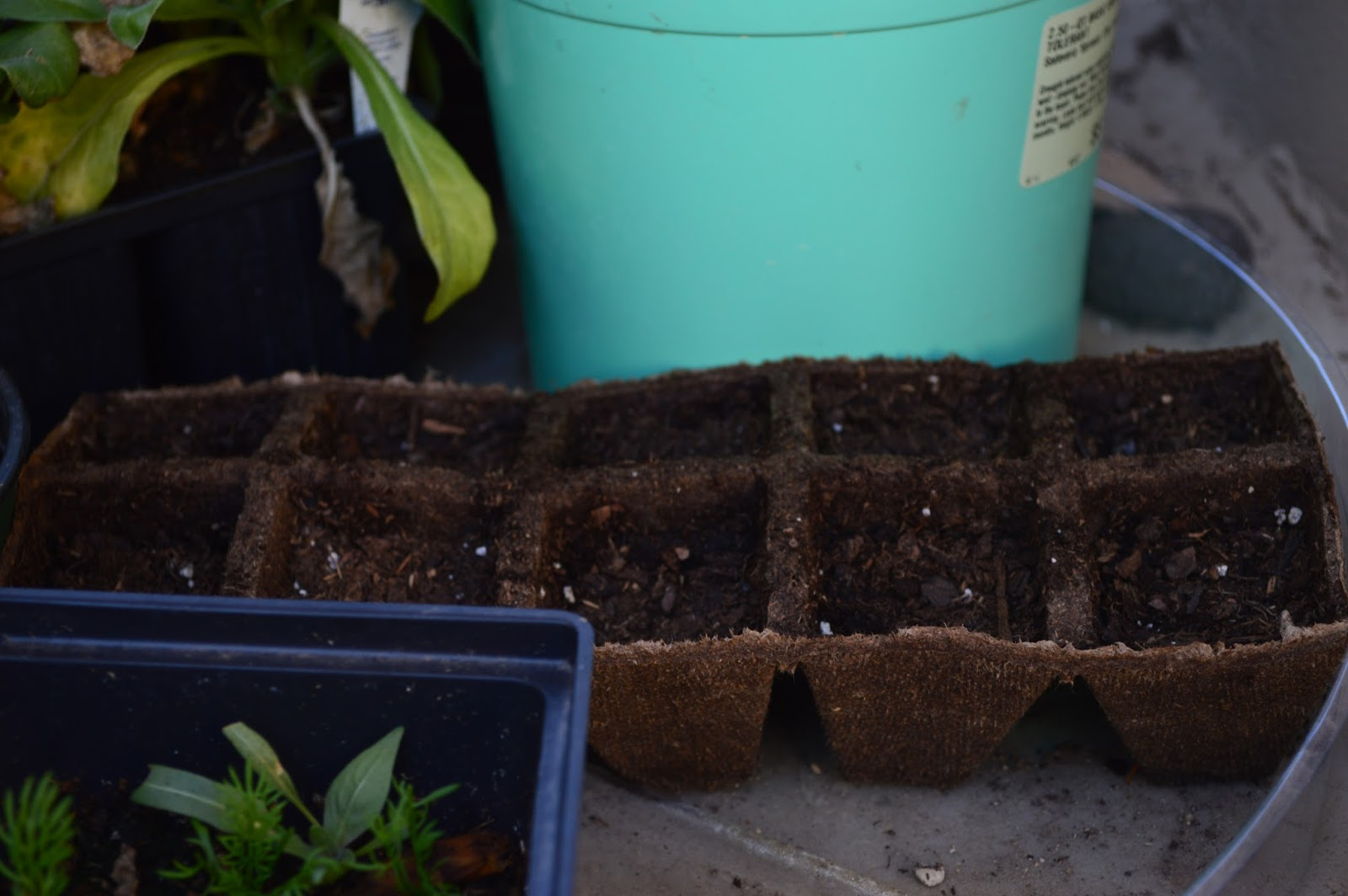 Planting times, starting garden seeds