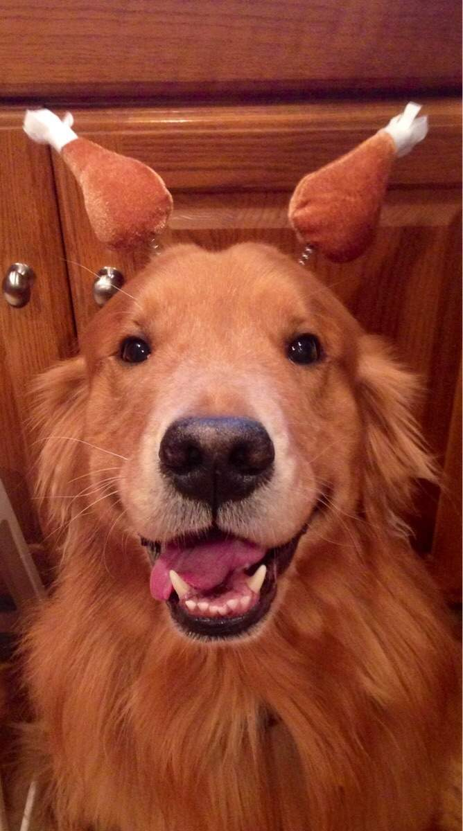 Cute dogs - part 252, adorable dogs, funny dog photo