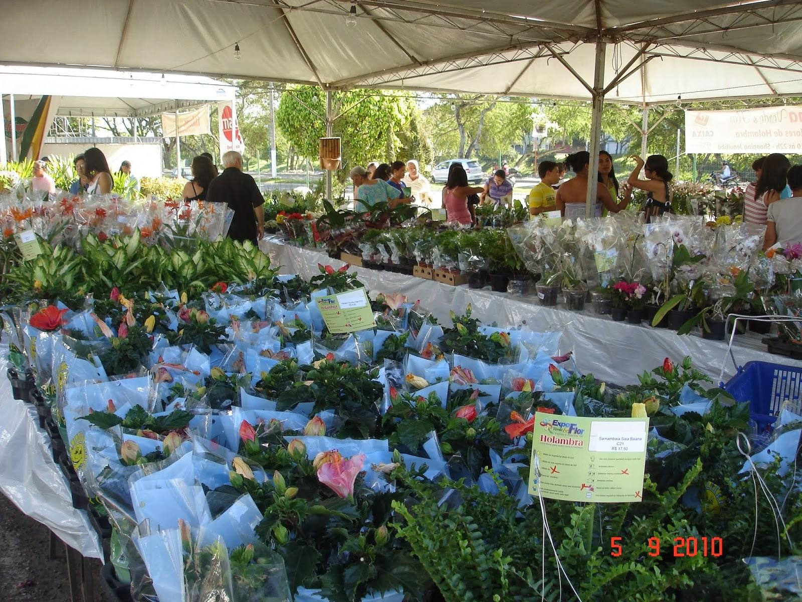 Feira de Flores de Holambra vai até domingo