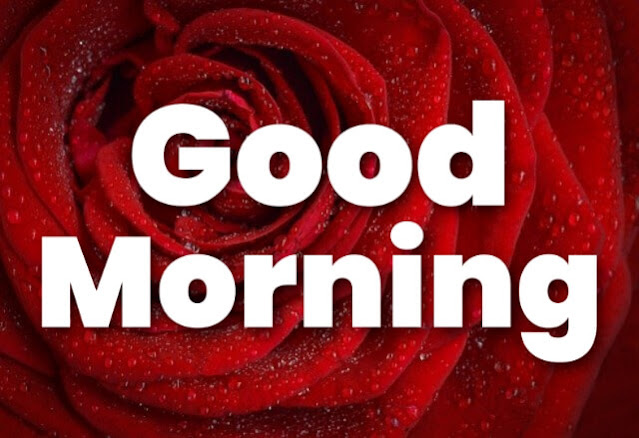 good morning red rose bouquet images