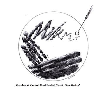 Contoh hasil isolasi streak plate method