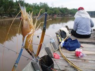 Tips Jitu Teknik Memancing,mancing udang galah muara,muara gembong,selat panjang, trik mancing udang,sungai,youtube,