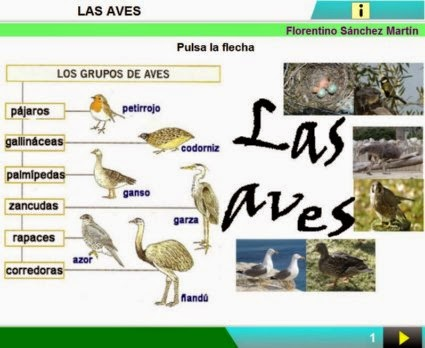 http://cplosangeles.juntaextremadura.net/web/edilim/curso_3/cmedio/animales_vertebrados_3/aves/aves.html