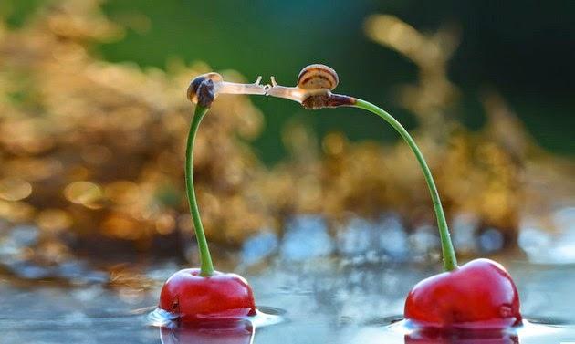 macro photography snails