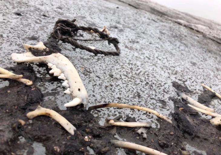 Deshielo de glaciar en Noruega revela tesoros escondidos de una antigua ruta vikinga