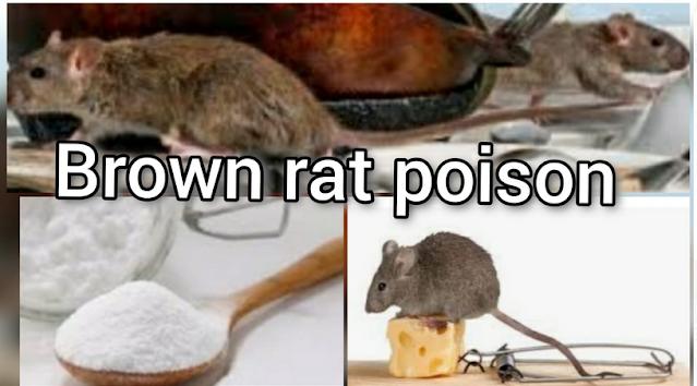 Brown Rat Poison