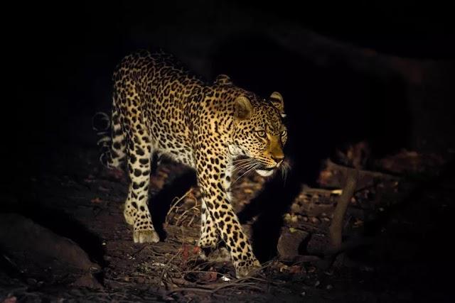 Top Tips for Enjoying a Night Safari in Africa