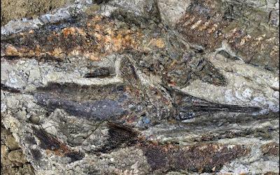 Βρέθηκαν τέλεια διατηρημένα απολιθώματα από τη μέρα της «Αποκάλυψης», πριν 66 εκατ. χρόνια