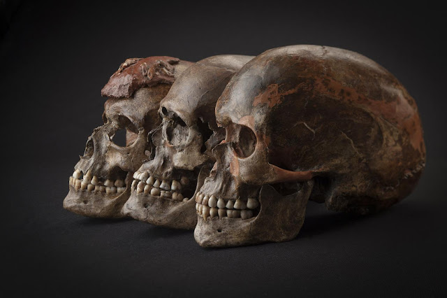 Genetics contributed to variations in stature among prehistoric Europeans
