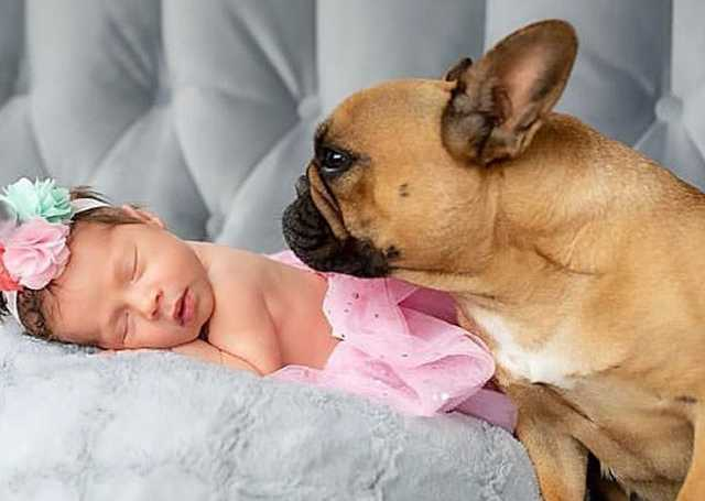 Dog with a baby