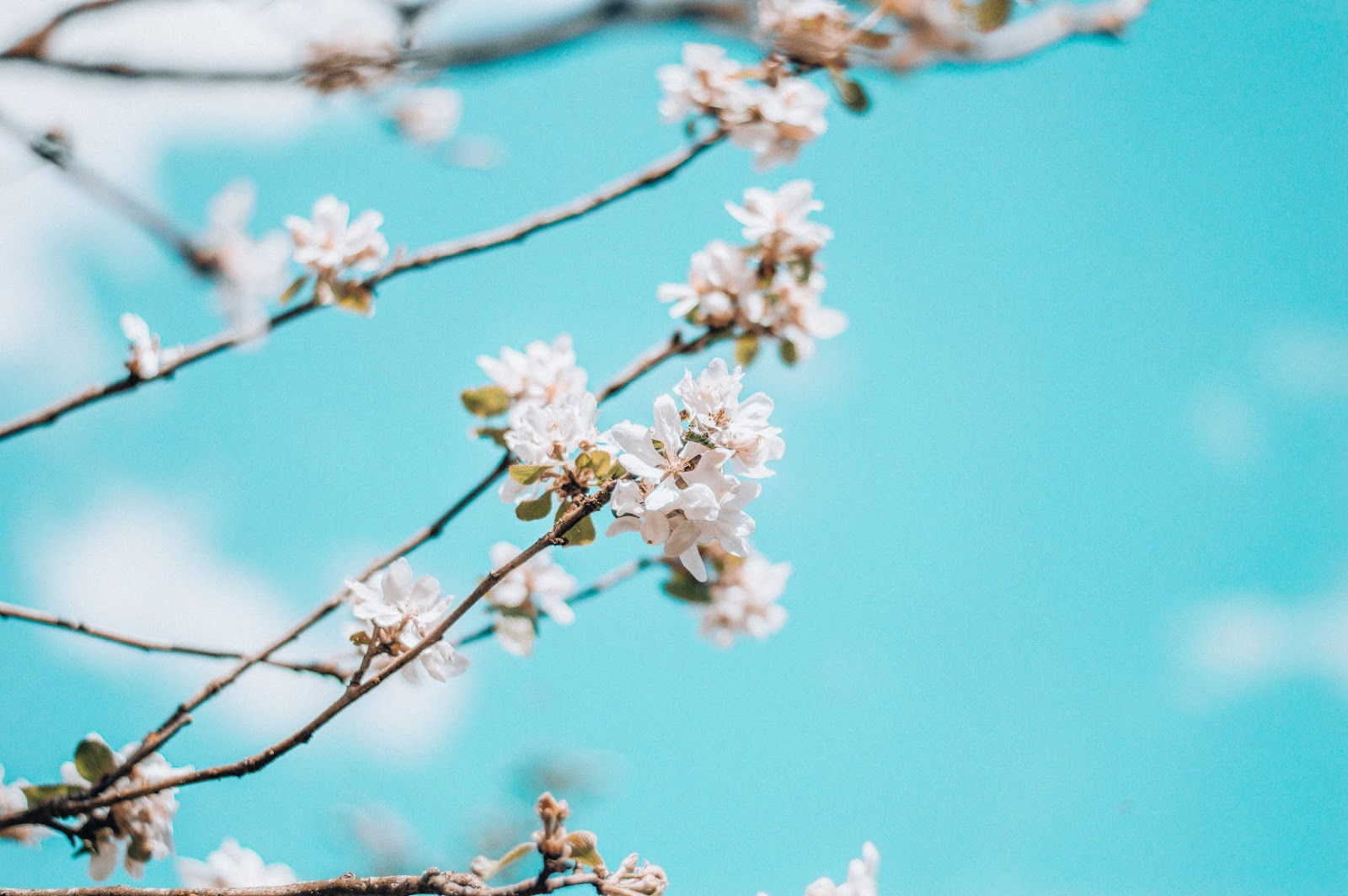 BLOSSOM | ANNA TWENTY SEVEN
