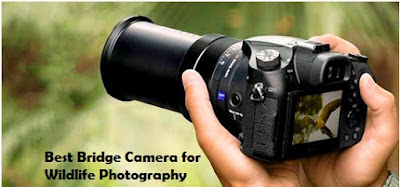 best bridge camera for wildlife photography, bridge camera with viewfinder