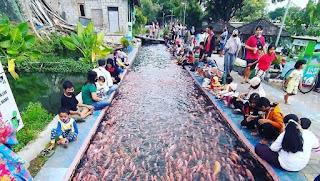Keuntungan Budidaya Ikan di Selokan Air depan rumah