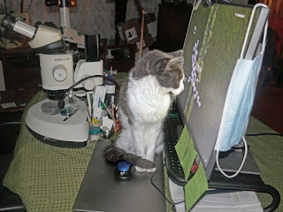 Spackle Puss (the cat) 34 (with computer & microscope 2020)