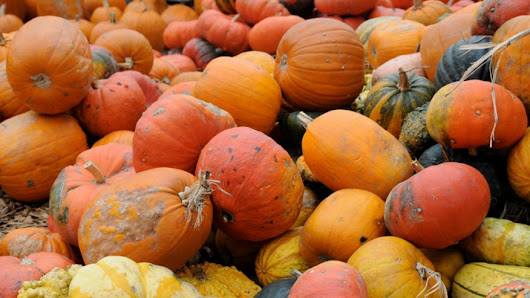 Surprising Facts You Didn't Know About Pumpkins