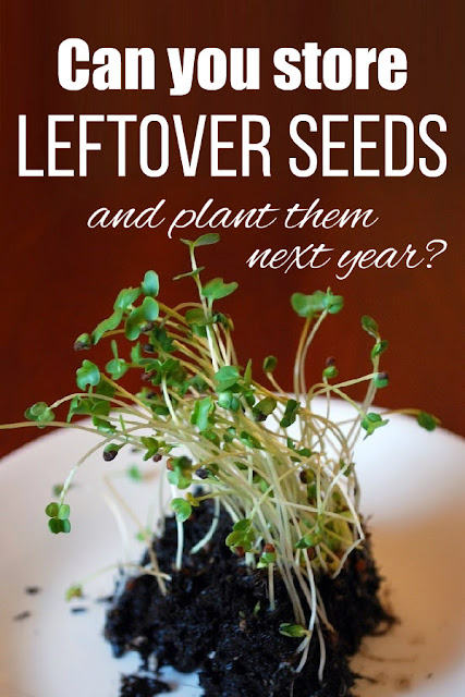 If you don't plant them all this year, can you save leftover seeds and plant them next year? Yes! Here's how to store them for the best germination rate.
