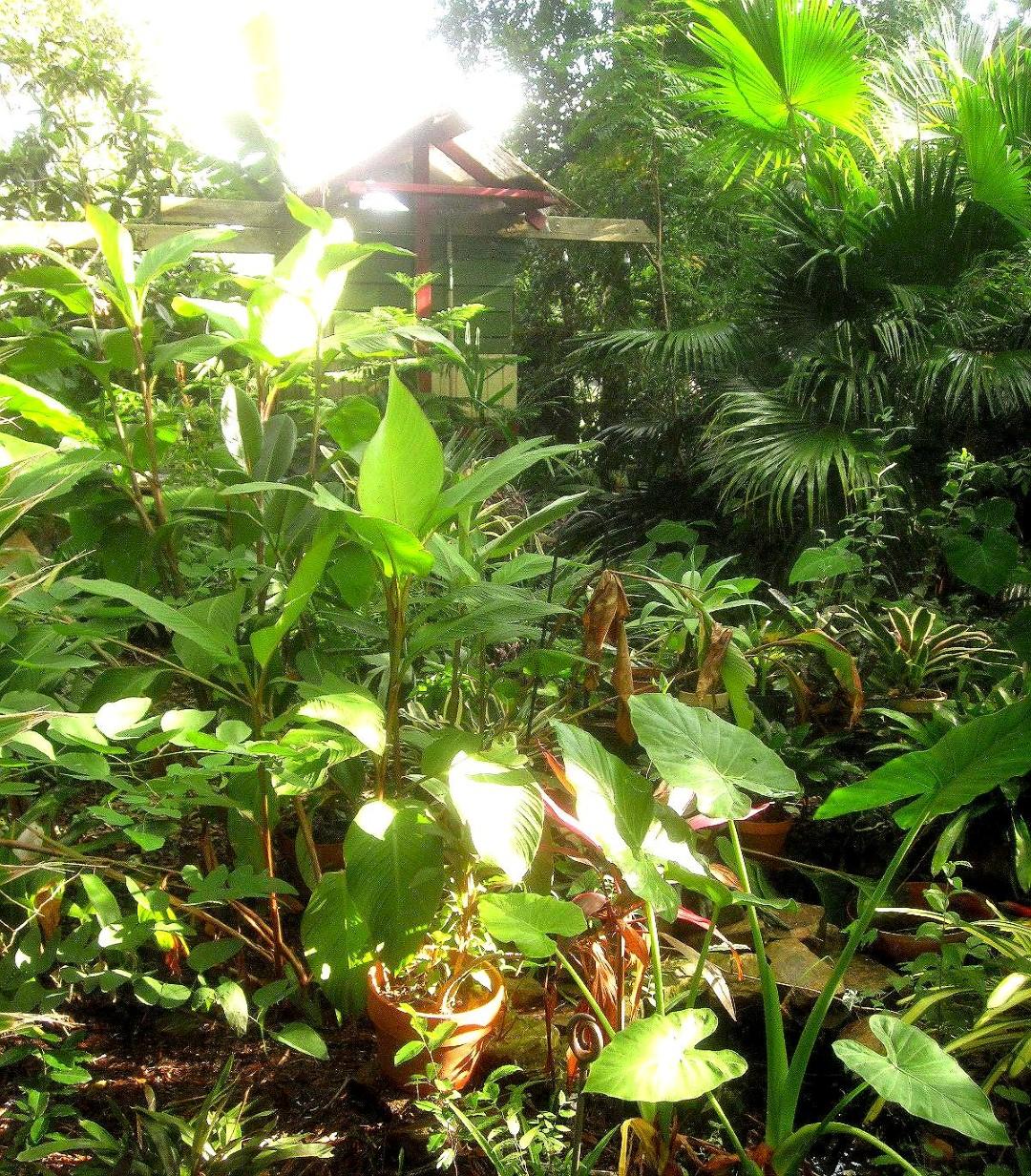 tropical backyard designs - 28 images - tropical backyard ...