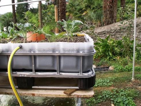 Acquaponico cosa serve per iniziare con un impianto di for Vasca pesci esterno