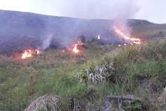 Kebakaran Hutan dan Lahan Terjadi di Samosir