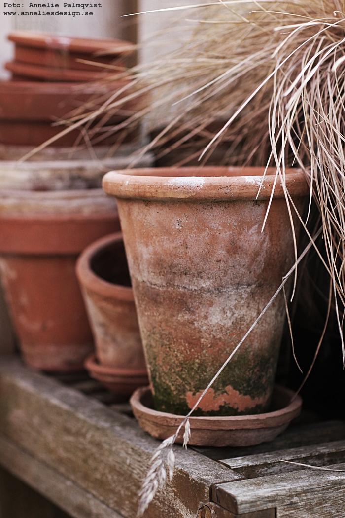 kruka, terracotta, terracottakrukor, utomhus, trädgård, trädgården, uteplats, uteplatsen, trädäck, trädäcket, altan, altanen,
