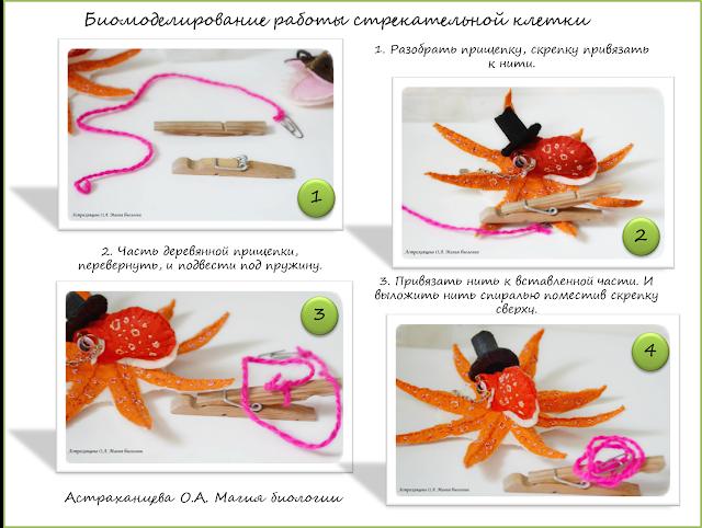 palchikovyj-teatr-biomodelirovanie-osminog-udilshhik-gidra