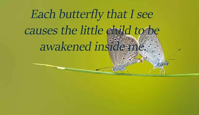butterfly love quotes for her