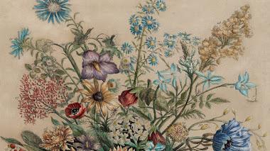 12 meses de flores, el catálogo de plantas de flor de Robert Furber