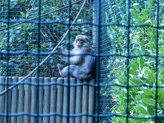 Parco Gallorose(ガッロロゼ公園)サル