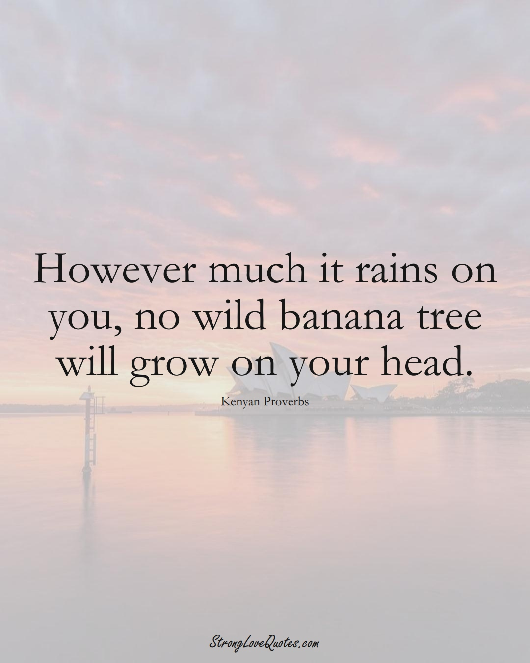 However much it rains on you, no wild banana tree will grow on your head. (Kenyan Sayings);  #AfricanSayings
