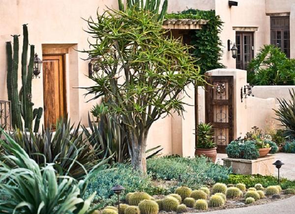 Jard n de cactus y suculentas guia de jardin for Casas decoradas con plantas naturales