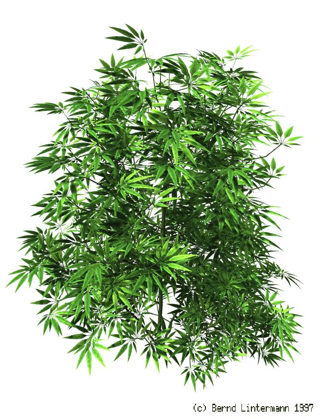 Weed Leaf Drawing Tumblr at GetDrawings | Free download |Weed Plant Drawings