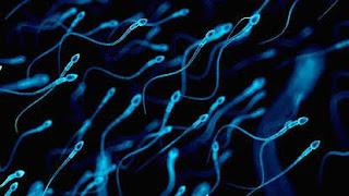 Covid impacta na fertilidade masculina
